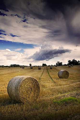 Hayfield with round bales. Photo by Rick Harrison (CC BY-NC-SA 2.0)